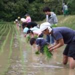 種子島~西之表を体験!体感!! サーファー米の田植え体験