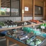 八重の里 新鮮野菜たち