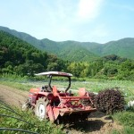 元気印の菜園畑(げんきじるしのさえんばっけ) ひろ~い畑