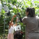 農家民宿 一里の里(いちりのさと) 地元の子どもたちへ収穫体験のプレゼント