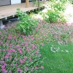 農家民宿 やすらぎお花が絶えないお庭
