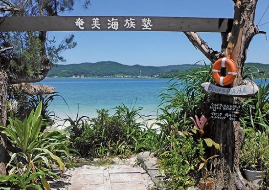 奄美海族塾海を楽しめるお宿